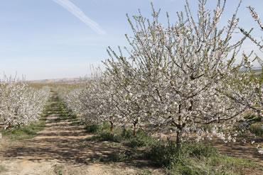 Camp ametlles - Fruits Ribes